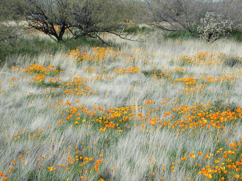 Carex garden design by carolyn mullet for Natural grasses for landscaping